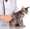 Ветеринарные клиники в Медвежьегорске